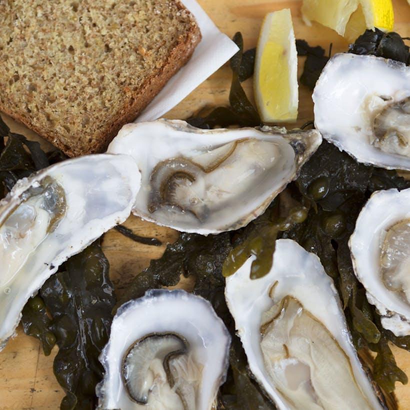 Shucked Louisiana Oysters
