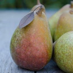 Organic Warren Pears