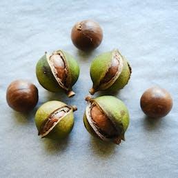Honey Caramel Macadamia Nut Tart