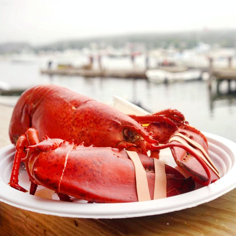 Cooked 1.5 lb Lobsters