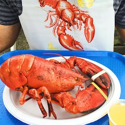 Cooked 1.5 lb Lobster - 4 Pack