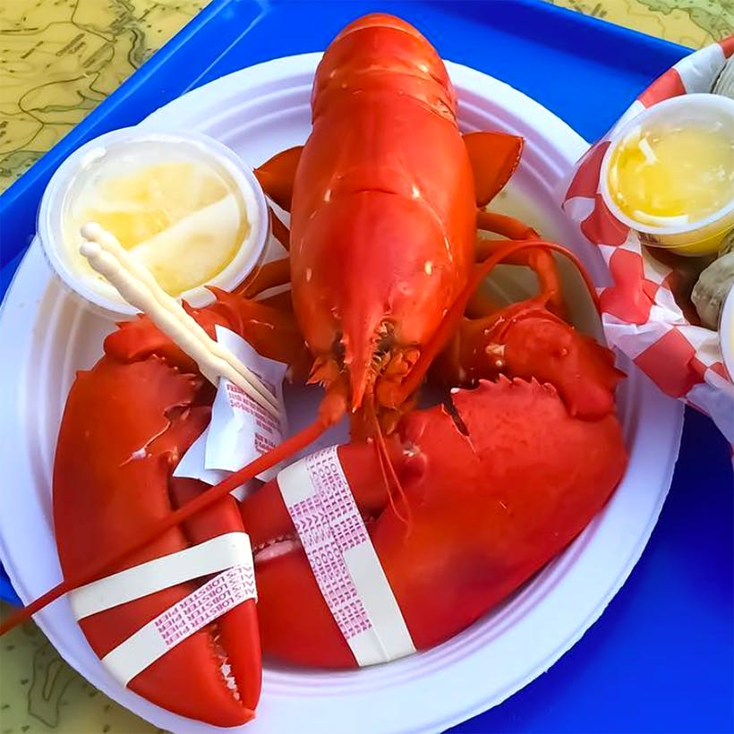 Cooked 2 lb Lobster - 2 Pack