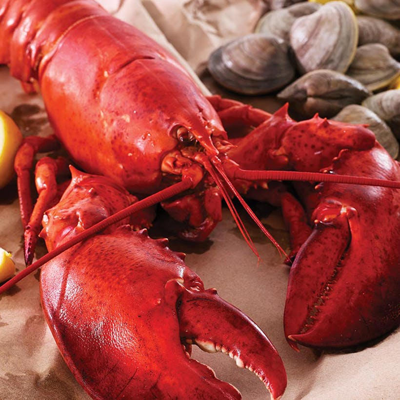 1.25 lb. Lobsters - 4 Pack