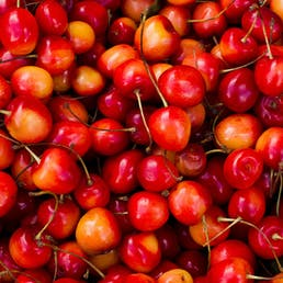 "Light Sweet Michigan ""Napoleon"" Cherries - 6 lbs"