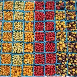 Farmer's Choice Heirloom Tomato Variety Pack - 3 lbs.