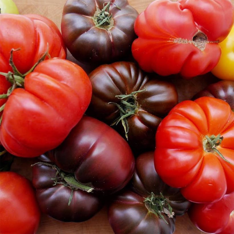 Red Heirloom Tomato Variety Pack - 3 lbs.